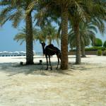 Abu Dhabi et Dubaï: week-end, hôtels et visite guidée d'Abu Dhabi et Dubaï