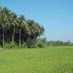 Thaïlande : week-end, hôtels et visite guidée de Thaïlande