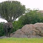 Séjour et vacances Tanzanie